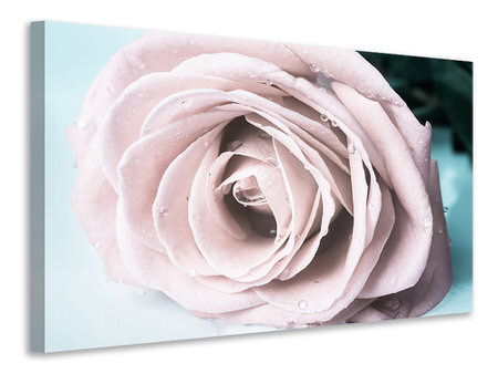Canvas print Pastel Rose