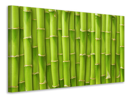 Canvas print Bamboo Wall