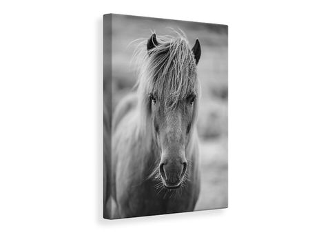 Canvas print Horse Being At The Corridor