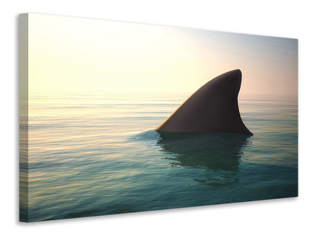 Canvas print Shark Fin