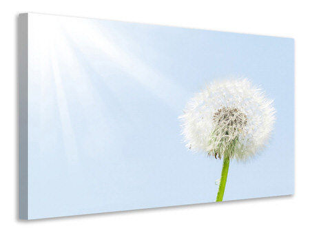 Canvas print Dandelion In Sunbeam
