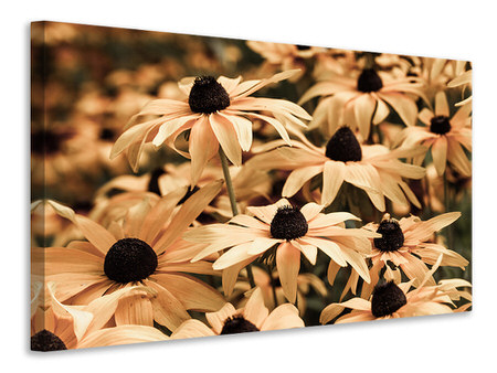 Canvas print Daisies In Sepia